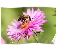 The Pink Pollinator Poster