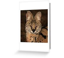 A Serval Cat Greeting Card