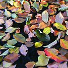 A Bowl of Autumn by Paula Tohline  Calhoun