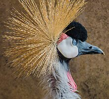 Crowned Crane by Photopa