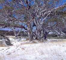 Early season snow, Snowy Mountains, Australia by DBigwood