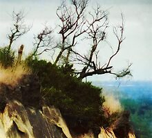 Surviving on the Cliff Top  by PictureNZ