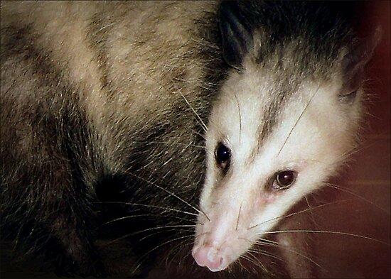 Opossum, Sweet Possum by paintingsheep