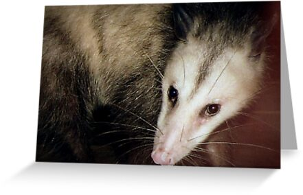 Opossum, Sweet Possum by paintingsheep