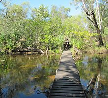 A Footbridge across Edith River through Bush & falls. by Rita Blom
