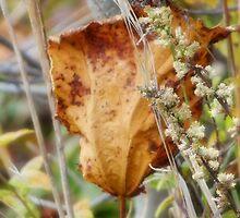 Fallen Leaf 3 by vigor