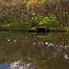 Murray river (Pinjarra) by Elliot62
