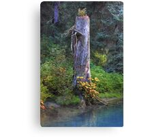 Tree trunk (HDR) Canvas Print