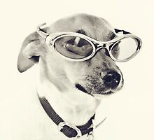 Fabulous Creamy Java Sunglasses Dog by CptnLucky