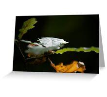 Sunlit Oak Leaves Greeting Card