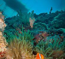 Clownfish Below Boat by HFinO