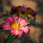 Daylily by Tracy Riddell