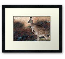 Kangaroo and joey Framed Print