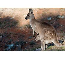 Kangaroo and joey Photographic Print