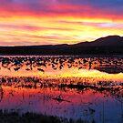 bosque del apache by Steven Ralser