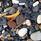 Gum leaves and rocks by Steven Ralser