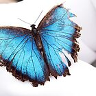 Damaged butterfly by WendyM83