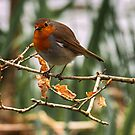Robin 3 by Glen Allen