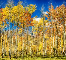 Colorful Colorado Autumn Aspen Trees by Bo Insogna