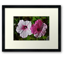 Two Tone Petunia Framed Print