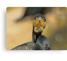 great cormorant Canvas Print