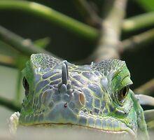 do you think I'm looking like a frog? - piensas que me parece como una rana by Bernhard Matejka