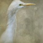 Cattle egret by Jan Pudney