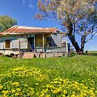 Beauty is With In  Rural NSW  by Kym Bradley