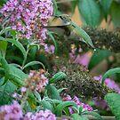 Ruby-throated Hummingbird by Bill Spengler