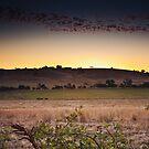 Farmland, Lysterfield by Michael Tuni