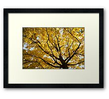 Under A Yellow Tree Framed Print