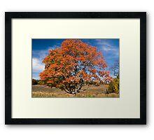 My Tree Framed Print
