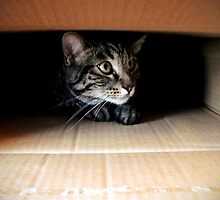 Jasper laying in a Box by Jan  Tribe