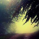 Foggy forest by kumari