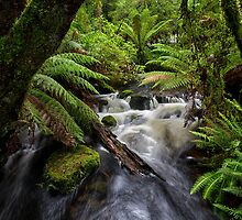 Small Water Cascade, Mt Field, Tasmania by Chris Cobern