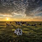 Cows Portrait by THHoang