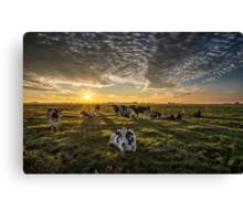 Cows Portrait Canvas Print