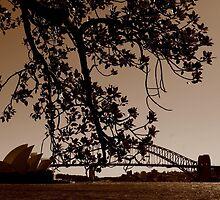Sydney by Shannon Friel