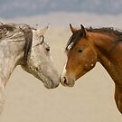 Stallions Nose to Nose by Kent Keller