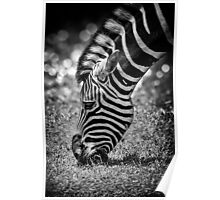 Spots & Stripes Poster