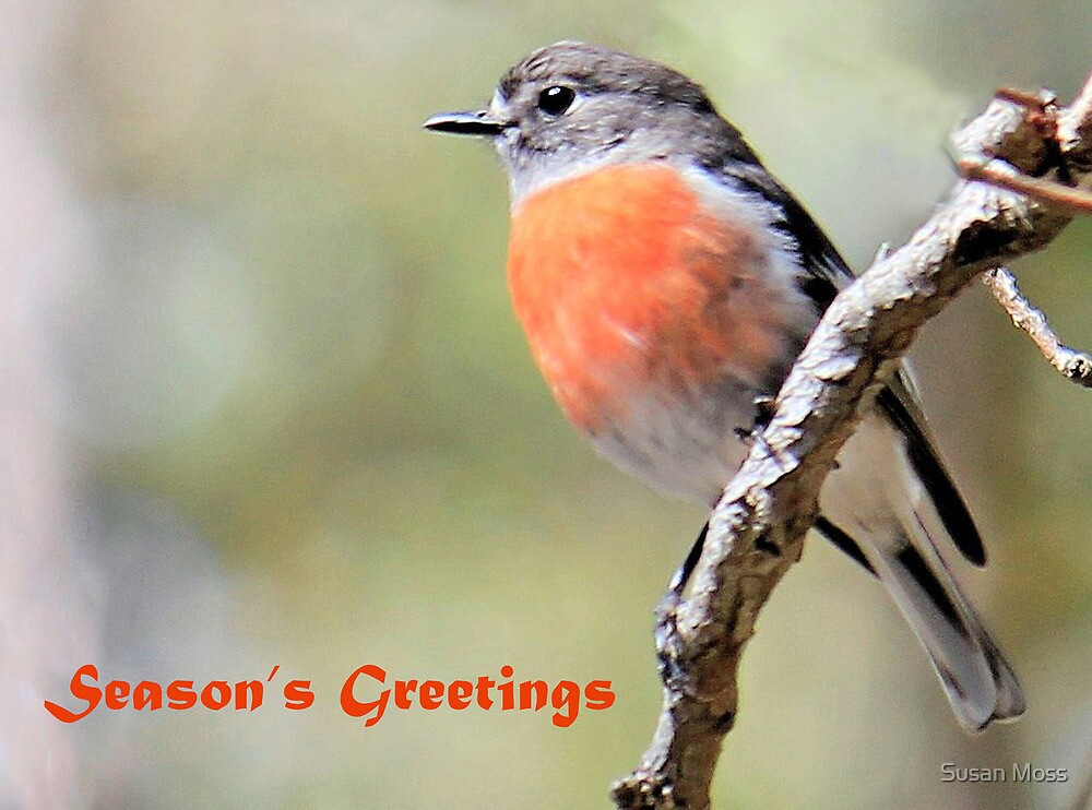 Scarlet Robin Christmas Card by Susan Moss