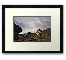 Cow on a mountain Framed Print