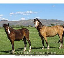 2014 May  New Beginnings herd members by Ellen  Holcomb