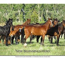 2014 November   New Beginnings Herd by Ellen  Holcomb
