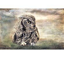 Western Screech Owl Photographic Print