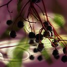 Elderberry lightning by RosiLorz