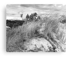 Dune Fauna  Canvas Print