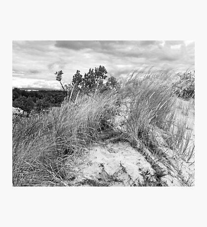 Dune Fauna  Photographic Print