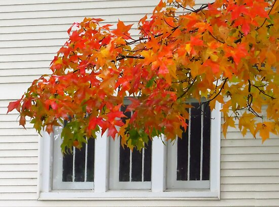 Window to Autumn by lorilee