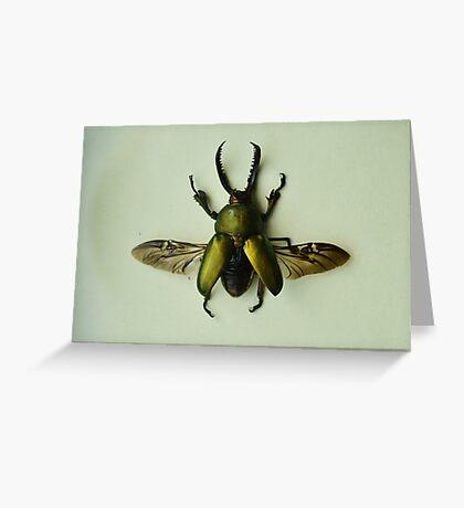 Lamprima Adolphinae - Iridescent Beetle Greeting Card